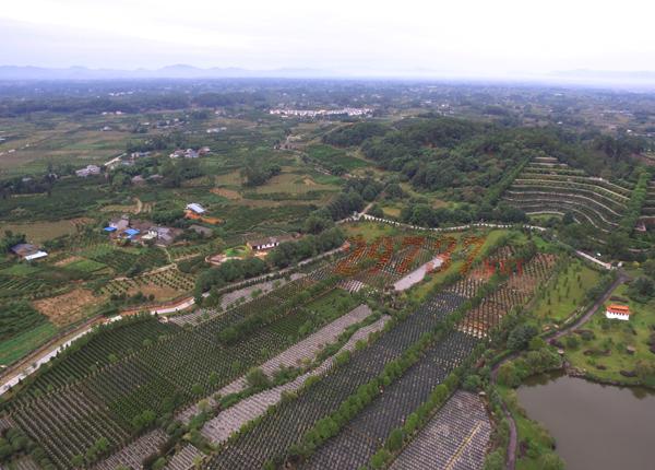 青城山味江陵园正月初一至初十的禁忌、正月初一至初十代表的日子