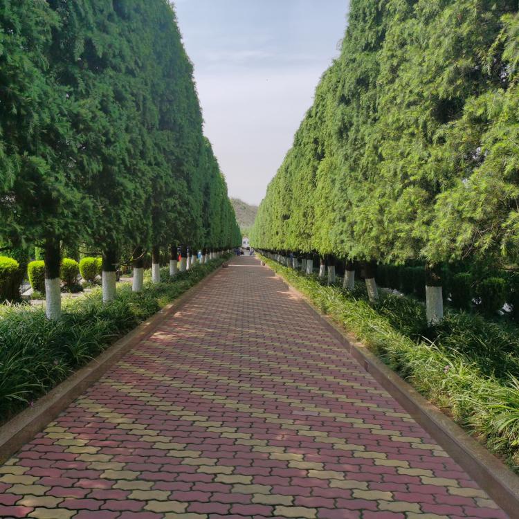 《换个角度看公墓》:造葬大朗贵无敌金马河成都西门温江大朗陵园航拍